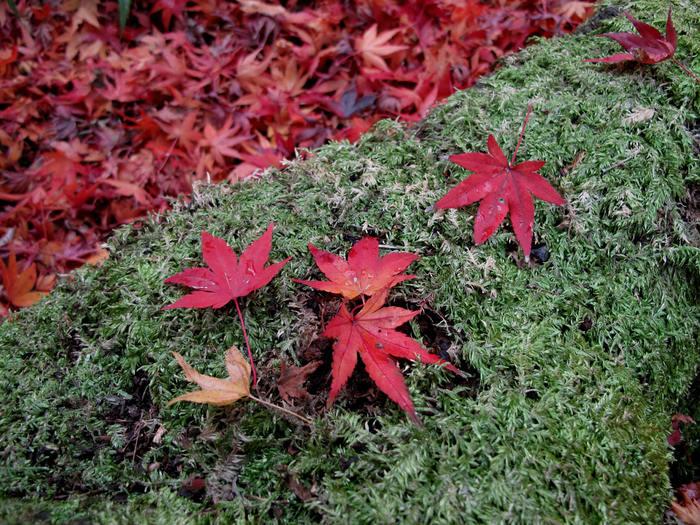 初冬 神戸・京都の旅(二日目)_d0150720_13532569.jpg