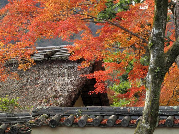 初冬 神戸・京都の旅(二日目)_d0150720_14244731.jpg