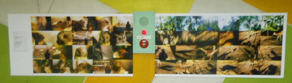 1911)「円山動物園アートアニュアル アニマルフォトストリート」地下鉄円山 11月19日(月)~3月31日(日)_f0126829_0192411.jpg