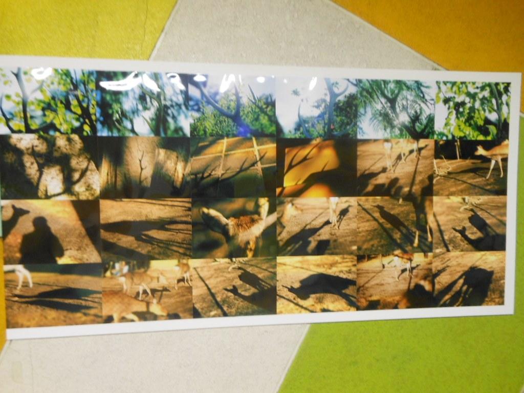1911)「円山動物園アートアニュアル アニマルフォトストリート」地下鉄円山 11月19日(月)~3月31日(日)_f0126829_0194477.jpg
