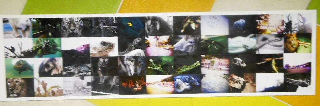 1911)「円山動物園アートアニュアル アニマルフォトストリート」地下鉄円山 11月19日(月)~3月31日(日)_f0126829_0223379.jpg