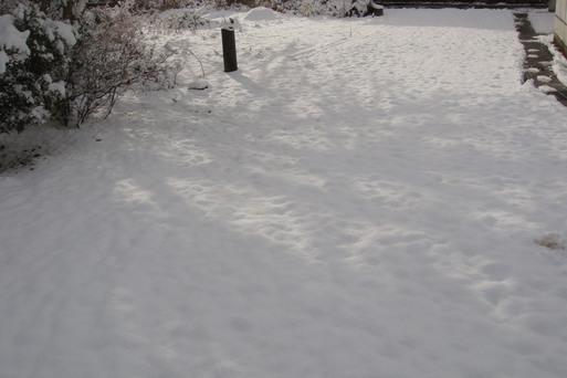 雪だよ_e0226943_054675.jpg
