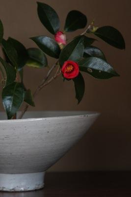 花だより_a0279848_20565680.jpg