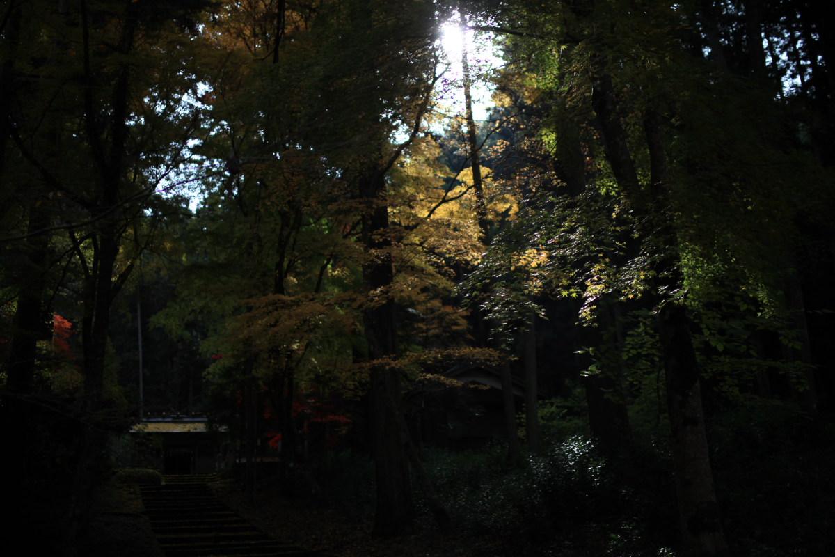 紅葉オフ会 2012 IN 丹波_f0021869_1534599.jpg