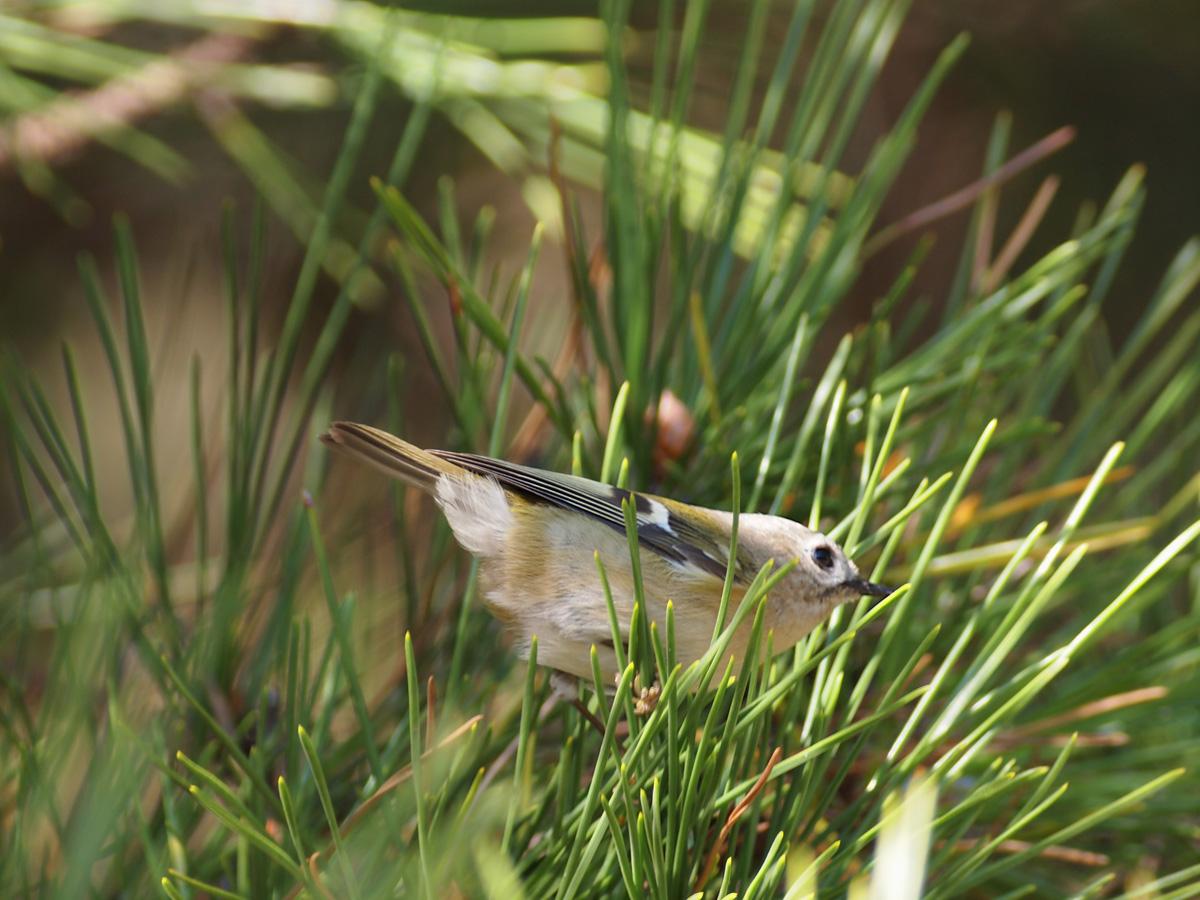 小さな鳥_b0021375_2381549.jpg