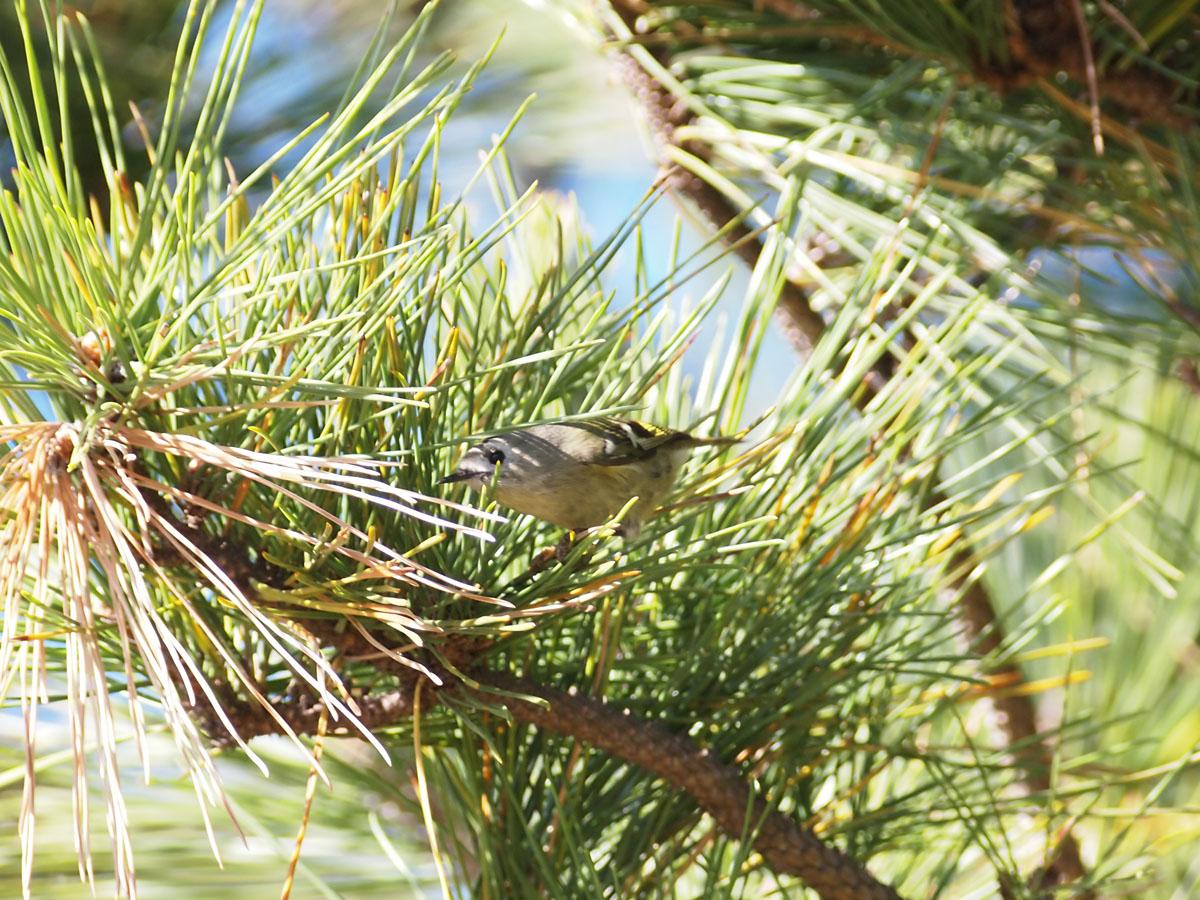 小さな鳥_b0021375_2383729.jpg