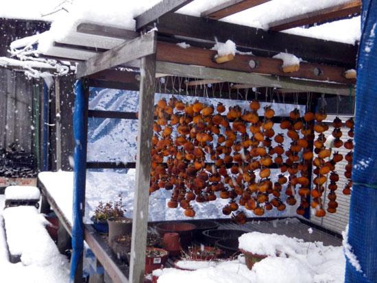 雪がモサモサ降り積もり~^^_a0136293_175289.jpg