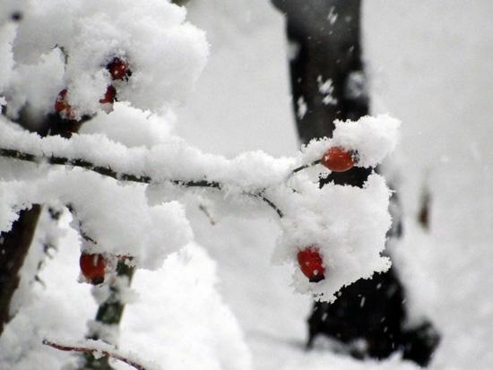 雪がモサモサ降り積もり~^^_a0136293_1756409.jpg