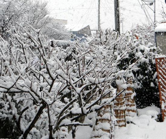 雪がモサモサ降り積もり~^^_a0136293_1756910.jpg
