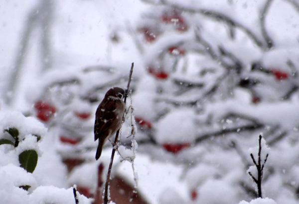 雪がモサモサ降り積もり~^^_a0136293_1801116.jpg