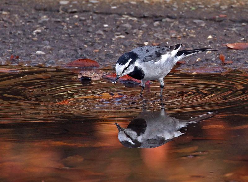 色づいた池の中には..._d0195897_15123962.jpg