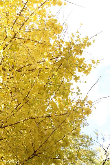 黄色と白_a0115202_2227362.jpg