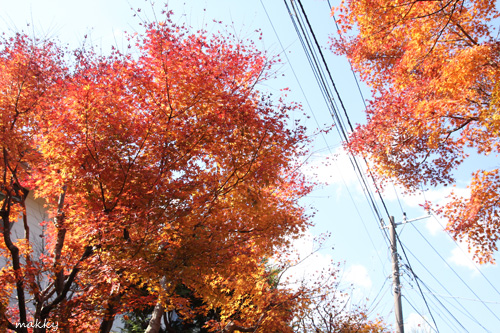 鎌倉撮影会_a0115202_23112867.jpg