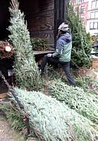ニューヨークの青空市場にも近づくクリスマス_b0007805_028545.jpg