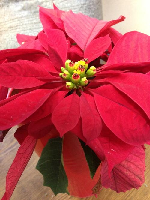 今週のお花とセール情報_a0200423_19441778.jpg