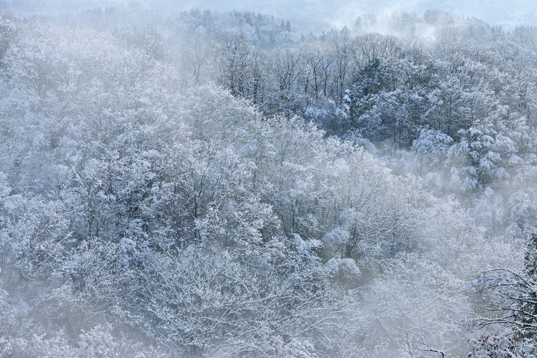 雪景色 第1号_c0220824_16204821.jpg