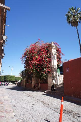 メキシコ初旅行2日目_e0279624_13225581.jpg