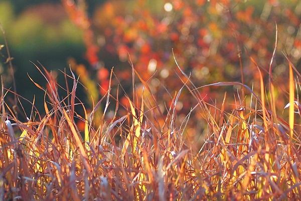 秋のなごり まだ残ってた_f0214527_957379.jpg
