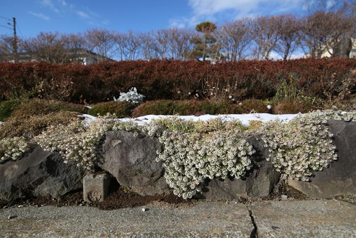 【Nagano Snapshot】 原村1 混沌こそ我が墓碑銘_c0035245_046421.jpg