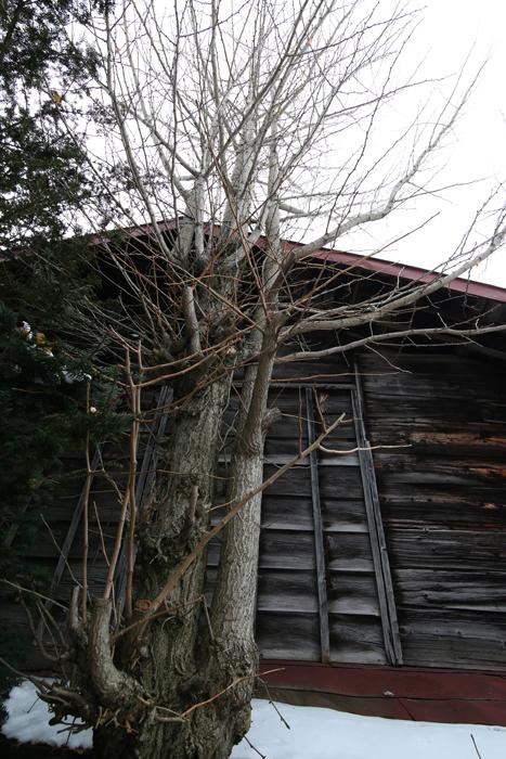 【Nagano Snapshot】 原村1 混沌こそ我が墓碑銘_c0035245_2471882.jpg