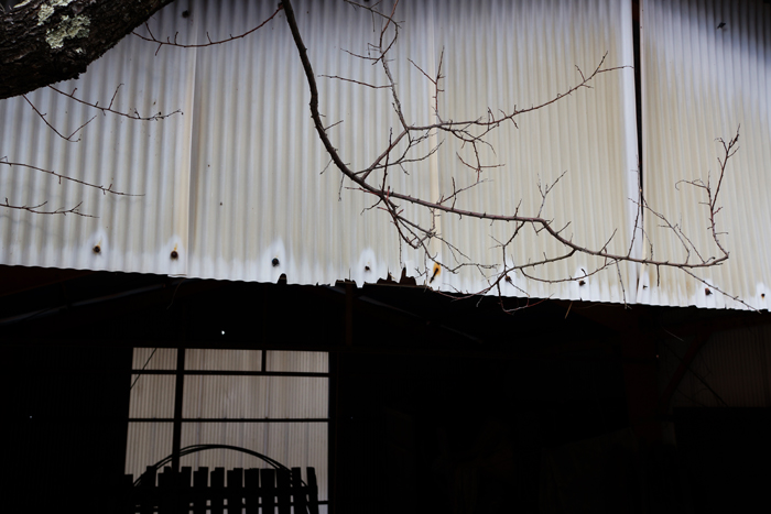 【Nagano Snapshot】 原村1 混沌こそ我が墓碑銘_c0035245_2502220.jpg