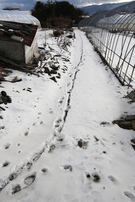 【Nagano Snapshot】 原村1 混沌こそ我が墓碑銘_c0035245_2554387.jpg