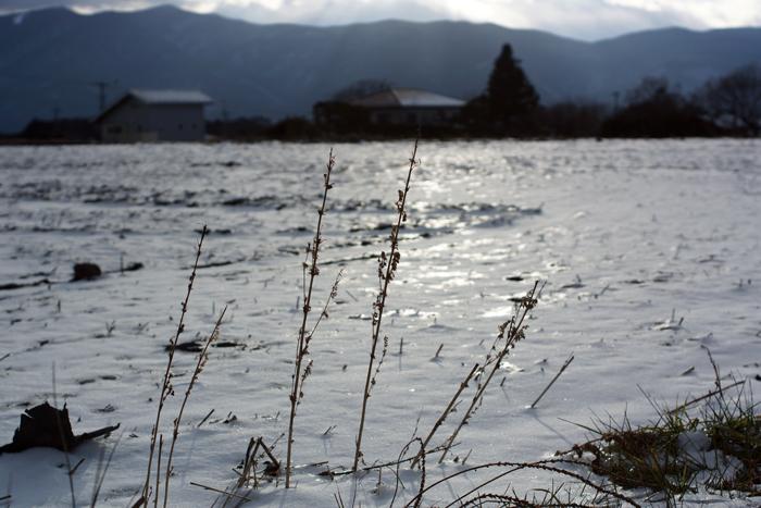 【Nagano Snapshot】 原村1 混沌こそ我が墓碑銘_c0035245_30133.jpg