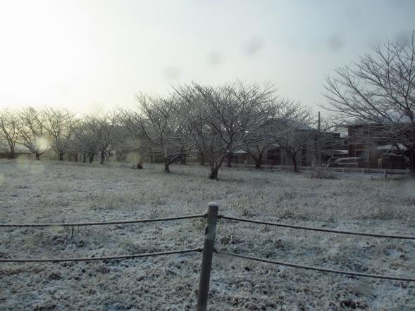 日本は寒いです_b0100062_9502623.jpg