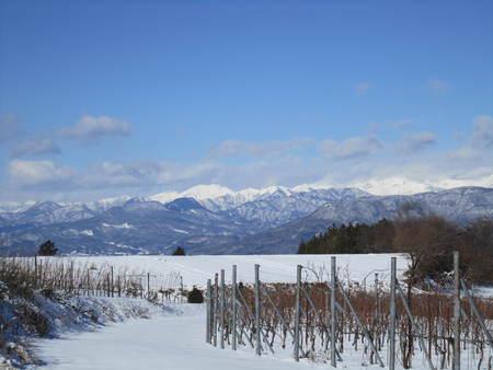 ぶどう畑も雪に化粧されました。_a0079512_1133054.jpg