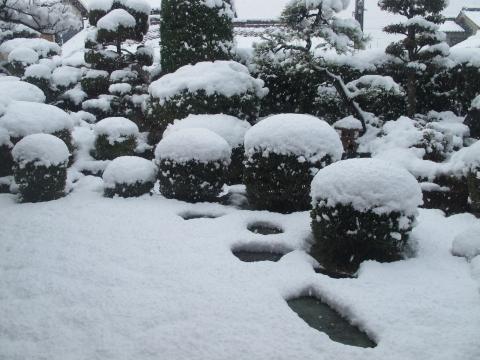 雪!_c0077531_23281993.jpg