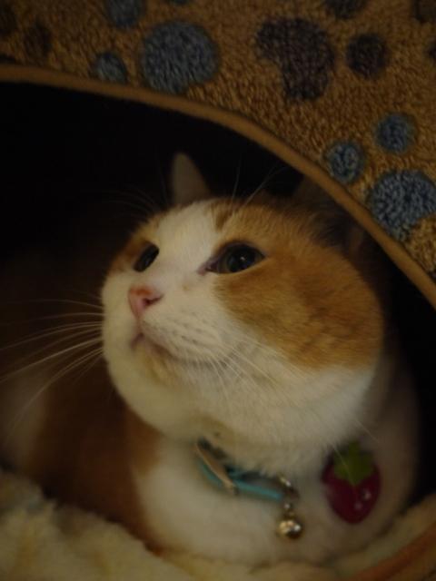 猫のお友だち ふくちゃん編。_a0143140_2332459.jpg