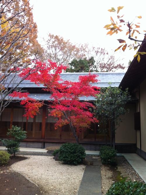 (報告)秋のお茶を楽しむ会_a0146912_19394569.jpg