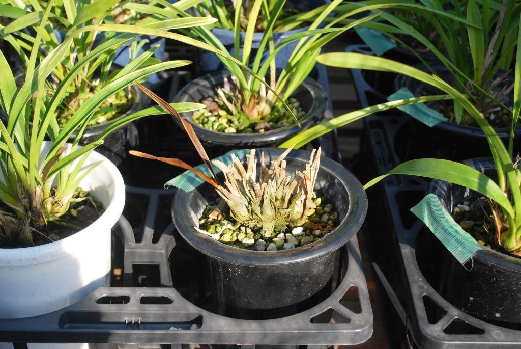 一に採光 二に肥料_f0176521_10144445.jpg