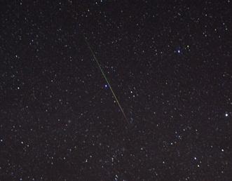流れ星となのねこのバラ_b0151748_11292299.jpg