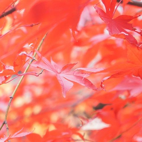 秋の思い出_a0292060_113226.jpg