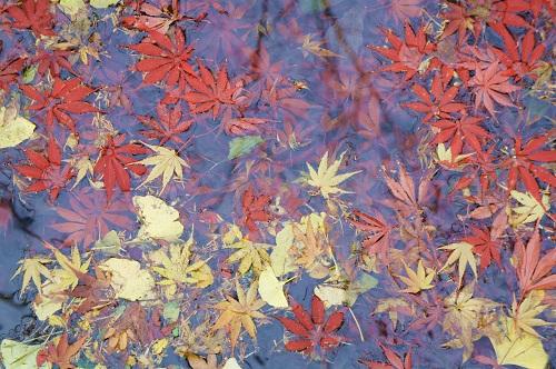秋の思い出_a0292060_1153984.jpg