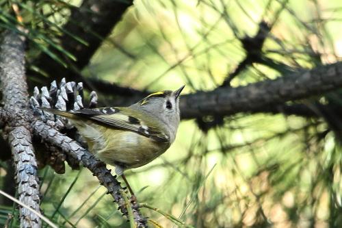 ★先週末の鳥類園(2012.12.8~9)_e0046474_2034012.jpg