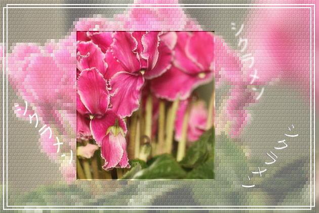 f0164592_2144263.jpg