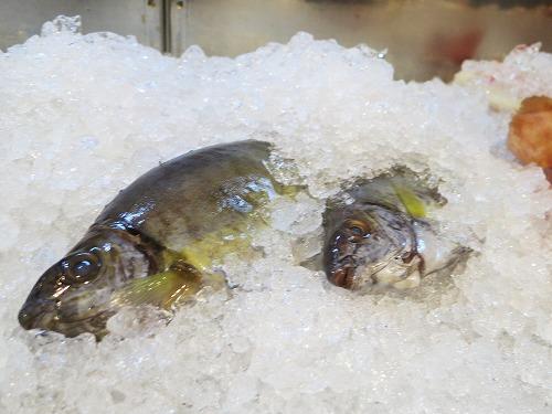 にぶ家で美味しい魚いただきま~す_a0055835_1734146.jpg