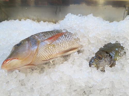 にぶ家で美味しい魚いただきま~す_a0055835_1735157.jpg