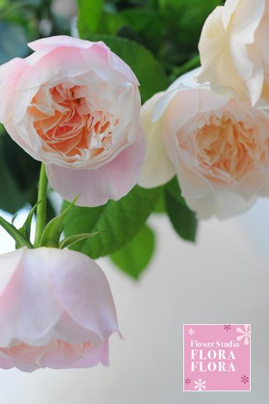"""ROSE\""""モナムール\""""と\""""ソルベペシェブラン\""""_a0115684_21332025.jpg"""