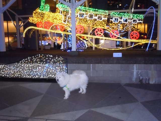 クリスマスイルミネーション_b0120492_1111159.jpg