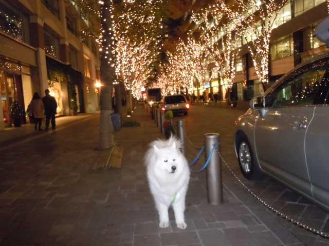 クリスマスイルミネーション_b0120492_1131434.jpg