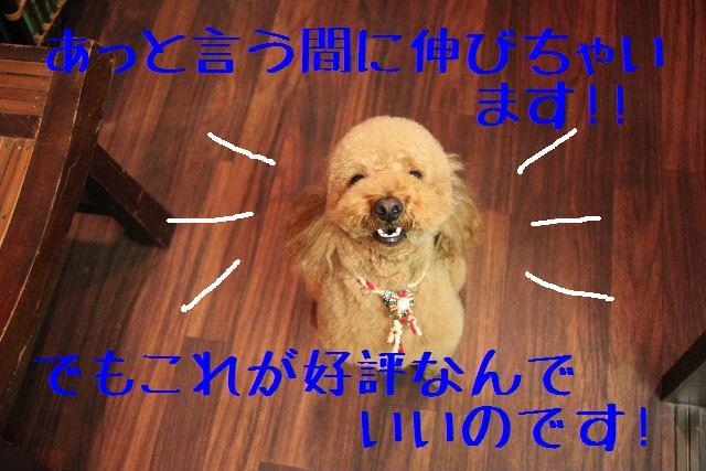 b0130018_023487.jpg