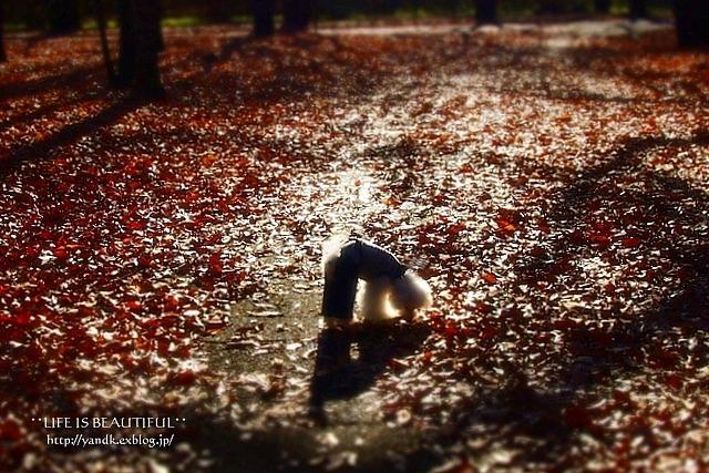 秋から冬へ_d0083623_19325182.jpg