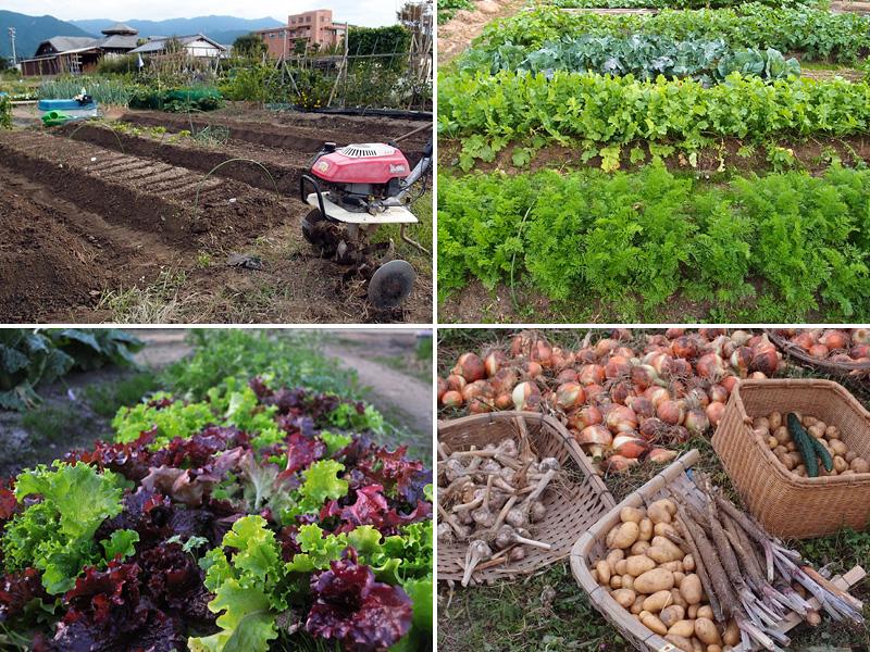 日本農園_d0032761_15314136.jpg