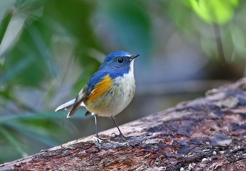 青い鳥もやって来た!_d0195897_1281080.jpg