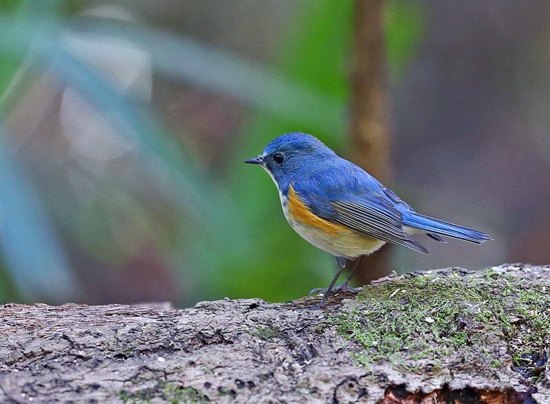 青い鳥もやって来た!_d0195897_1282675.jpg