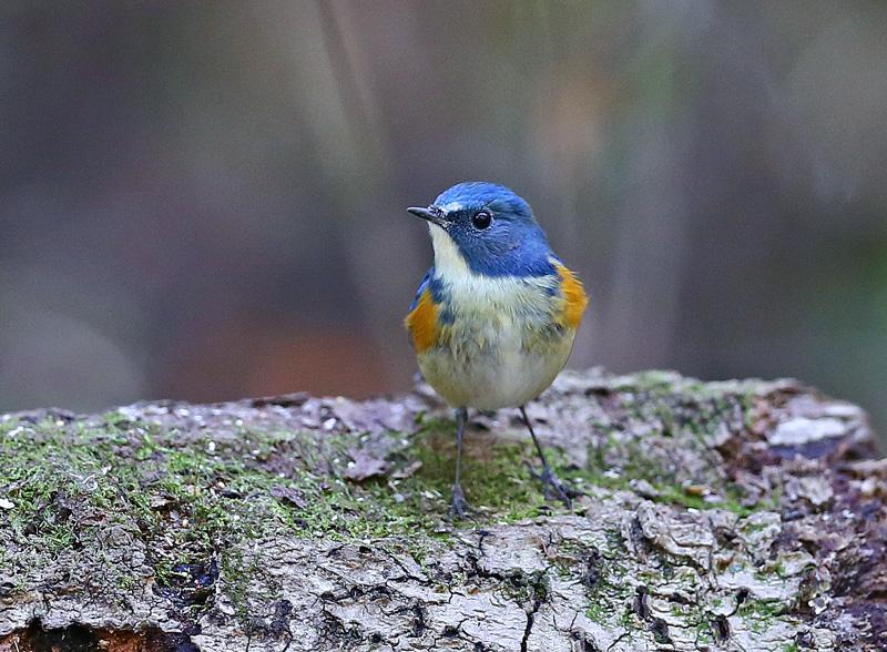 青い鳥もやって来た!_d0195897_128433.jpg
