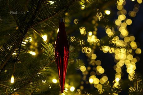 * クリスマスフォト会 *_c0083904_11443016.jpg